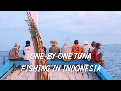One-by-one Tuna Fishing In Indonesia