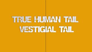 "The Neanderthal ""Vestigial"" Tail. Nuff Said..."