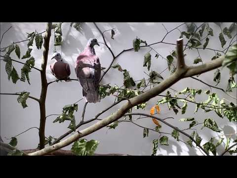Vogelausstellung Astrild, Gwatt b. Thun BE, 2019