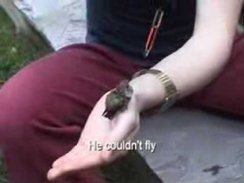 Saving the Baby Hummingbird