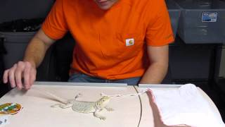 White Hypo Leatherback Dunner Unboxing