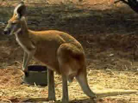 Rolf Harris - Tie Me Kangaroo Down Sport (LYRICS + FULL SONG)
