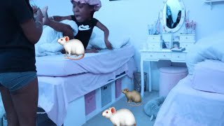 PUT MICE ALL OVER MY TWIN SISTER WHILE SLEEP GONE WRONG !!!