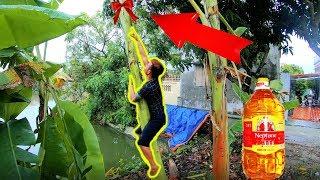 PHD | Thử Thách Leo Cây Chuối Dầu Ăn | Climbing Banana Trees