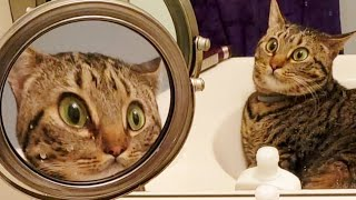 Weekly Funny Cats 😹 And Dogs 🐶 Videos - Try Not To Laugh!