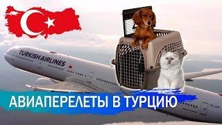 Авиаперелет в Турцию. Летим с животным.