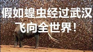 假如蝗虫经过武汉飞向全世界!