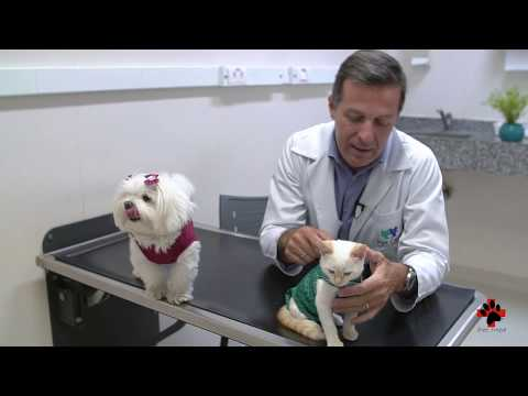 Pet Med & Pet Care - amor e tecnologia