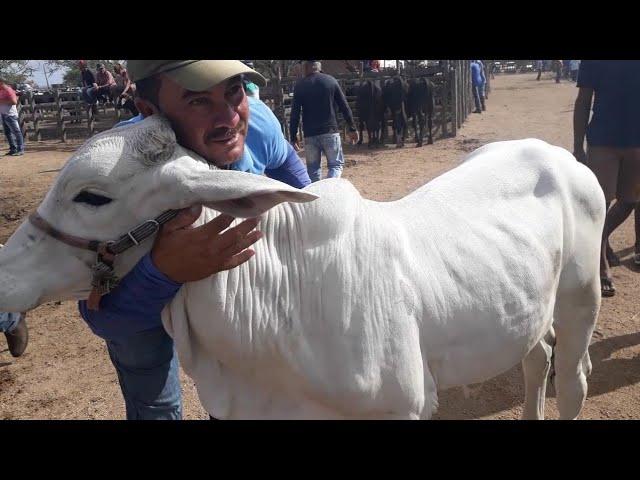 Feira de gado de CACHOERINHA PERNAMBUCO do dia 07/03/2019