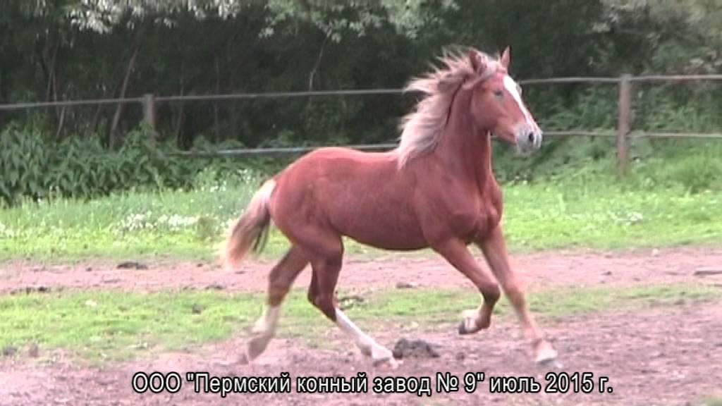 Каталог ветеринарных препаратов для животных (крс, свиней, лошадей, птицы). Купить препараты для лечения сельскохозяйственных животных,