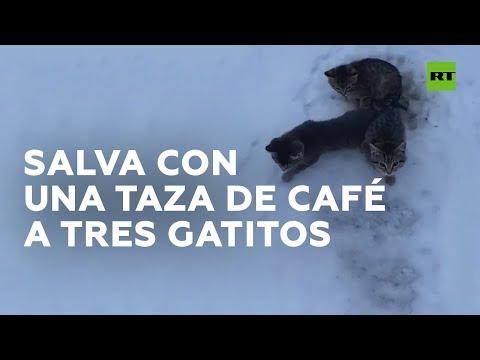Salva con una taza de café a tres gatitos congelados de una muerte segura