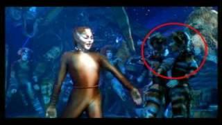 Didja Ever Notice? (in the cats video)
