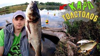 Ловля Карпа и Толстолоба Рыбалка с ночёвкой