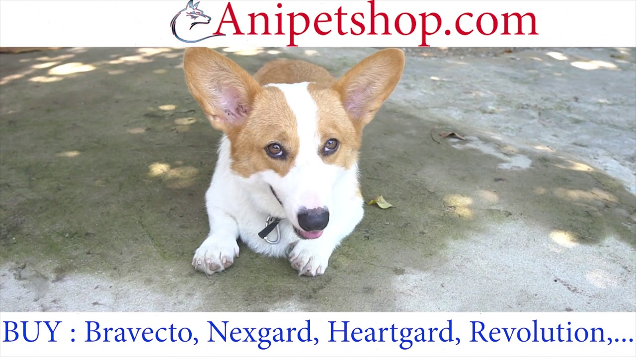 Anipetshop.com - Buy Pet Medications ( Bravecto, Heartgard, Nexgard, Revolution,...)