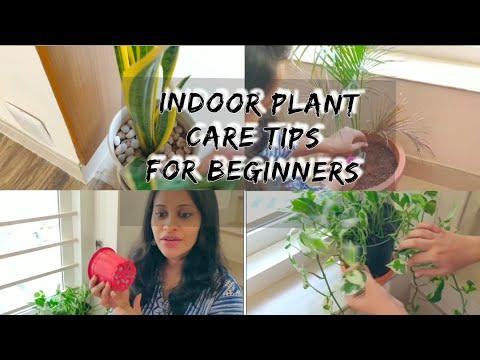 ഇൻഡോർ ചെടികളുടെ care/low light plants/houseplant care/homedecor/ plant care tips