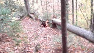 Maine Appalachian Trail Hike With Chocolate Lab, Gulf Hagas, Mount Katahdin, Iron Works