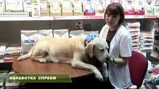 видео Инструкция по применению инсектоакарицидных капель для собак