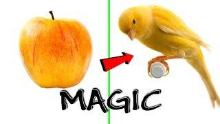 BEST Satisfying Zach King Magic Tricks 2019 | Oddly Satisfying Zach King Magic Vines