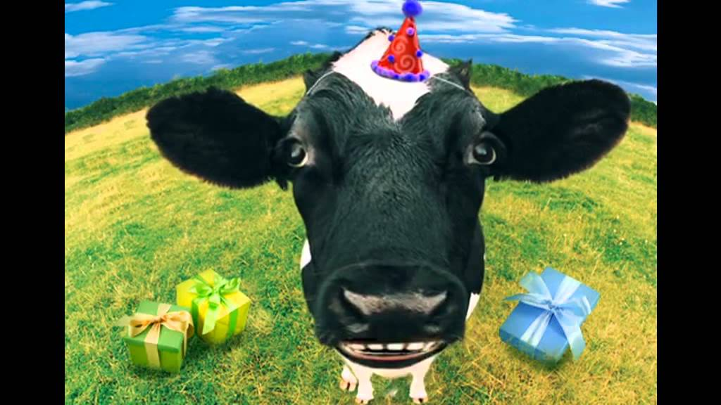 Happy birthday ellen from the meat joint cow youtube bookmarktalkfo Images
