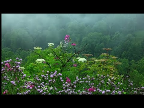 nature-relaxing-music-24/7.