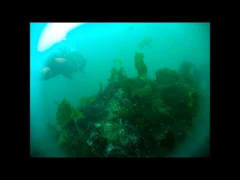 West Dover Club Dive