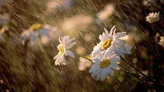 Дождь, гром, гроза, раскаты грома, шум дождя Релакс от природы