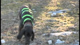 Teach Your Dog To Track & Recover Wounded Game - (available Oct 23,2012)