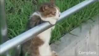 Видео про кошек, смешное до слез