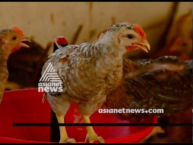 Spring Chicken from Thrissur active in markets