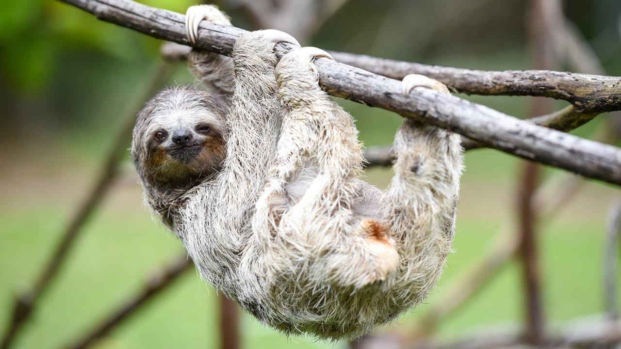 الـ 10 حيوانات الأبطأ في العالم !!