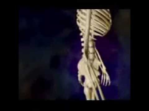 Types Bone Fractures - YouTube