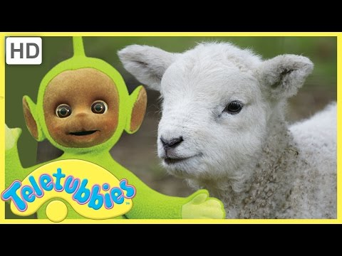 Teletubbies Full Episode - Mary Had a Little Lamb | Episode 257