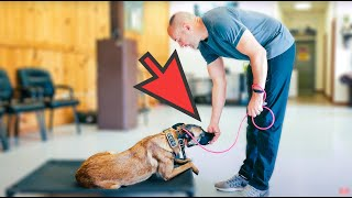YOUR DOG NEEDS THIS... MORE THAN ANYTHING!