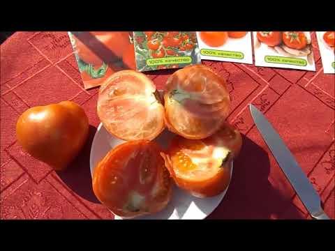 Отзывы о томатах фирмы Партнер | помидорах | помидоры | открытом | партнер | томаты | отзывы | грунте | фирмы | о | в