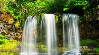 Great relaxing music sound of running water, birdsong • Peaceful atmosphere of nature