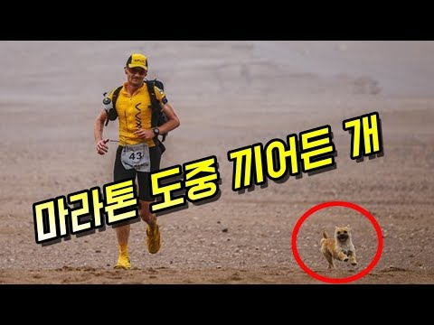 [감동]경기도중 끼어든 강아지의 놀라운 사연 - 감동바다
