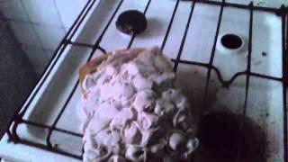 Как не следует варить пелемени(, 2015-04-08T18:31:54.000Z)