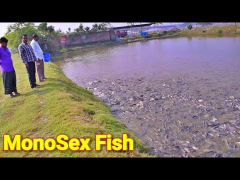 Monopriya Fish Farming In India