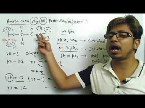 Amino Acid Charge At Different PH And Amino Acid Titration Calculation Problems
