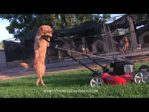 Chad Heritage - Dog mowing lawn