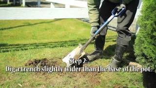 How To Plant A Hedging Fence