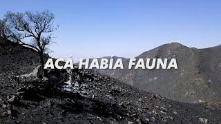 Así quedó el Cerro Pan De Azúcar después de los INCENDIOS