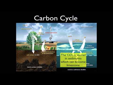 2013 Nutrient Cycling