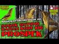 Sogok Ontong Trotol Gacor Dor Sangat Prospek Kedepan Body Big Tidak Mengecewakan  Mp3 - Mp4 Download