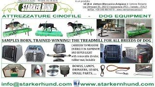 Dog Equipment Starker Hund