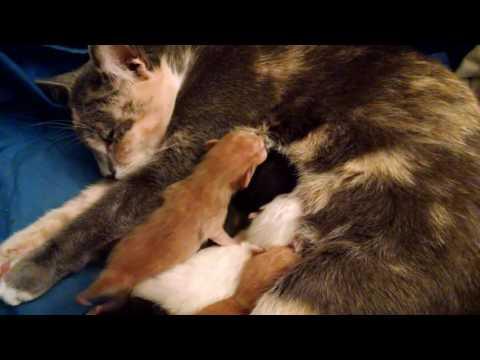 January 28-31, 2016 - Meet the Kittens...!