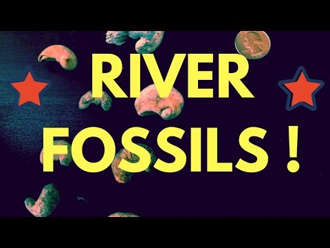 San Marcos River Fossils