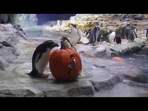 Rachel Lutzker - Detroit Zoo's Pumpkin Smash