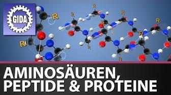 GIDA - Aminosäuren, Peptide und Proteine - Chemie - Schulfilm - DVD (Trailer)