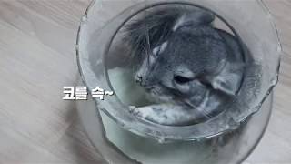 선생님의 취미생활 2탄 반려동물 친칠라